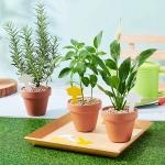 신세계백화점, 가정의 달 맞이해 반려식물 선물한다