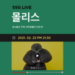 SSG닷컴, 식품·패션·뷰티 넘어 반려용품까지… '몰리스' 라방(라이브방송) 나선다