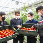 """[동아일보] 신세계푸드 5년치 토마토 선구매, """"스마트팜 지원"""""""