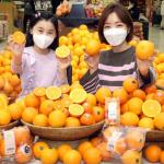 [중앙일보] 켄아저씨, 카라카라, 퓨어스펙…오렌지 품종이 이렇게 많아?